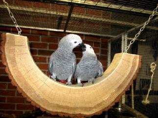 Halbmondschaukel für Papageien