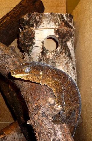 Nisthöhle für Geckos