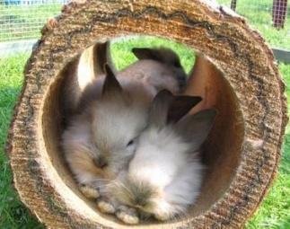 Durchlaufröhre für Kaninchen