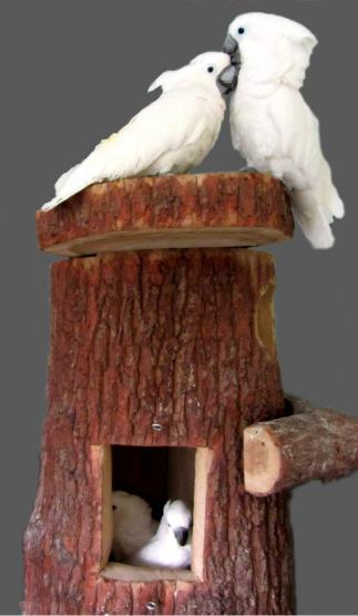 Nisthöhle für große Kakadus